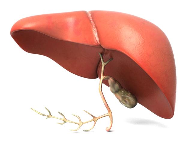 Diabetes Typ 2: Eine Hauptursache ist die erkrankte Leber!